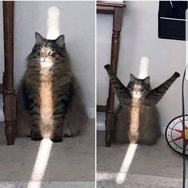 Khat Praise The Sun - Meme Guy