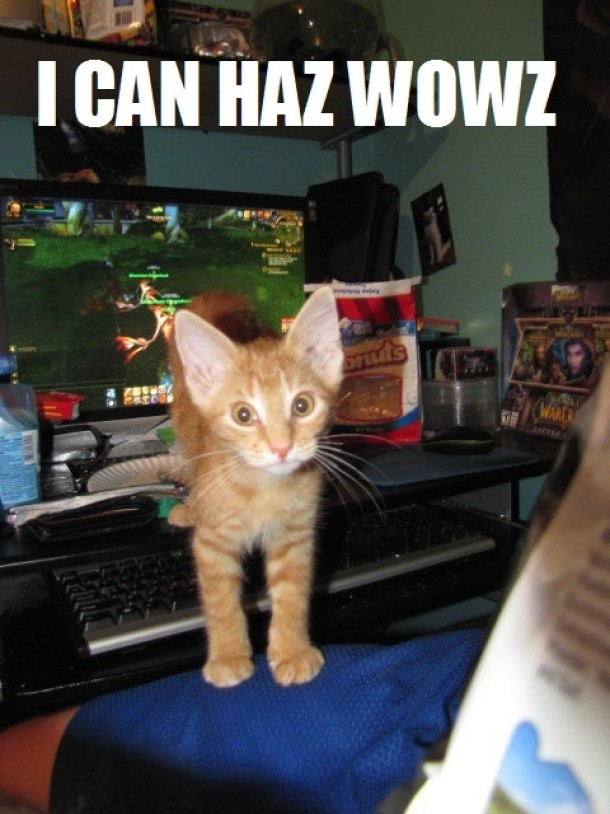 Kitteh pretty good at wow even without opposable thumbs