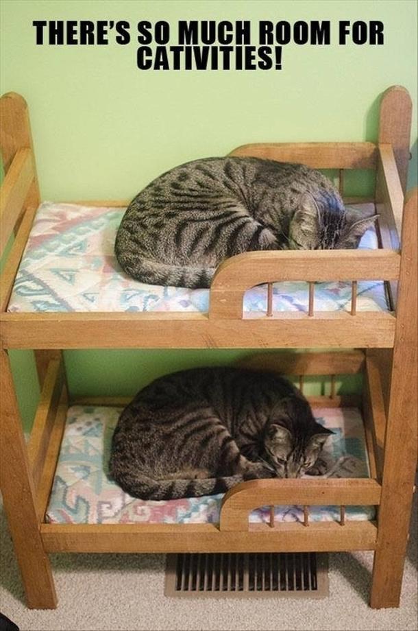 Kitty bunk bed meme guy for Small room meme