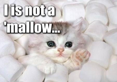 marshmallow-awwww-42379.jpg
