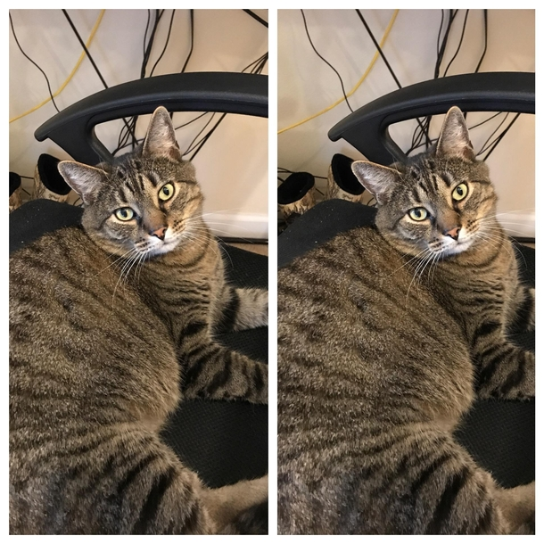 My cat before and after I tell him hes a good boy