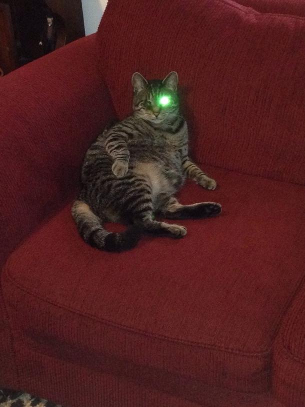 My Cat Has One Eye And My Flash Was On Cyborg Kitty Meme Guy