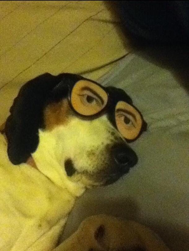 Sleeping Dog Meme