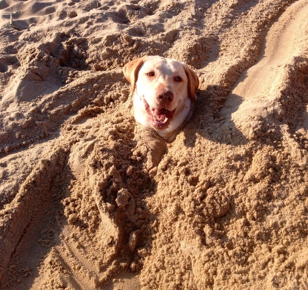 My Dog Was Totally Cool About Us Burying Him