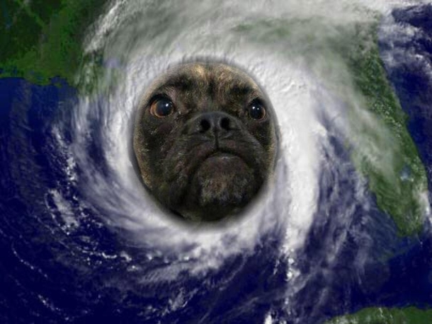 My dogs name is Arthur And since there just so happens to be a hurricane on the way with the same name my boyfriend decided this was appropriate