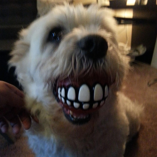 My friend got her dog a new ball