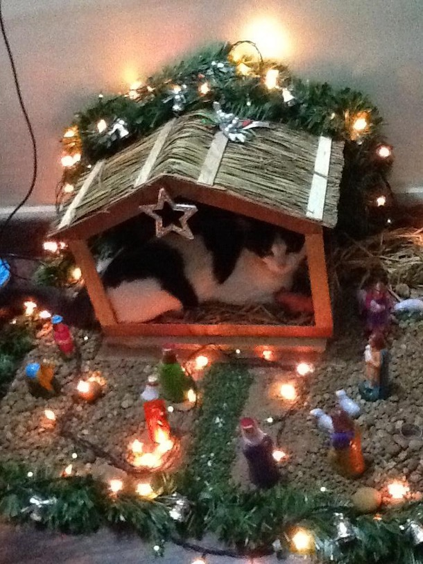 my in laws cat is really getting into the christmas spirit this year - How To Get Into The Christmas Spirit
