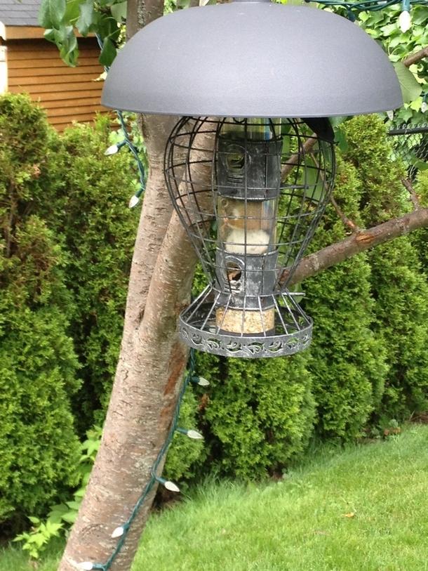 my mothers squirrel proof bird feeder 155091 my mothers squirrel proof bird feeder meme guy