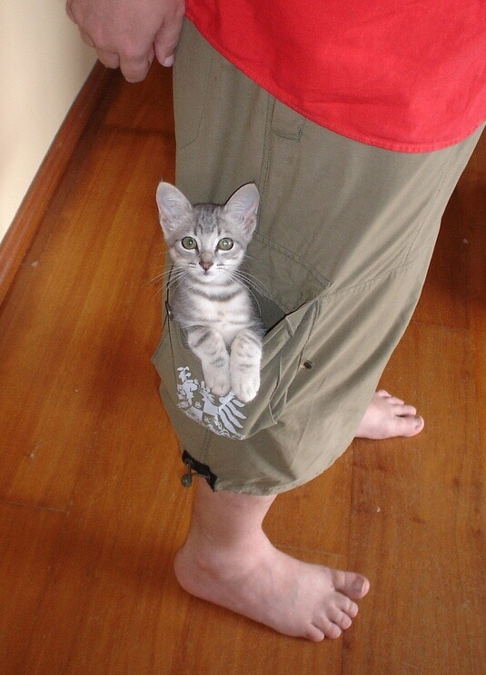 Usual pussy in my pocket pity