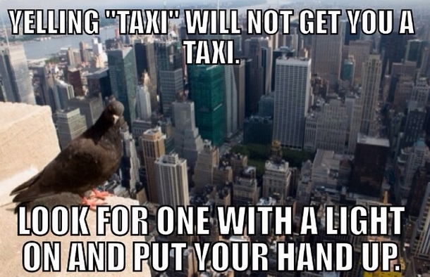 New York Advice Pigeon Meme Guy