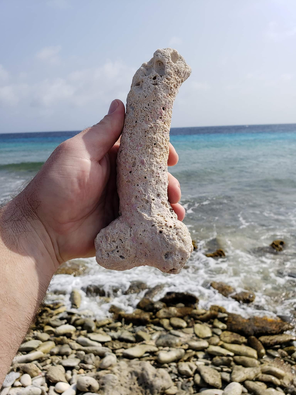 Not sure if penis shaped rock or a fossilized penis