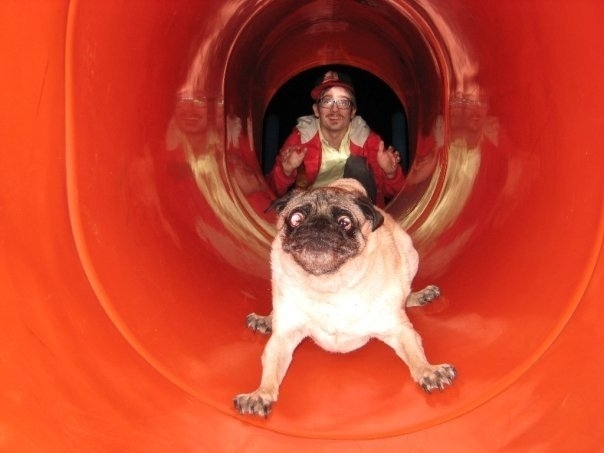 Note To Self Pugs Hate Slides