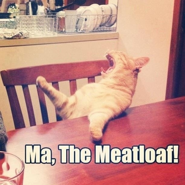 Can I Give My Dog Meatloaf