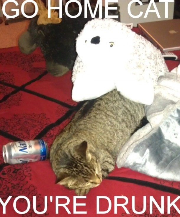 party cat my cat parties harder than i do meme guy