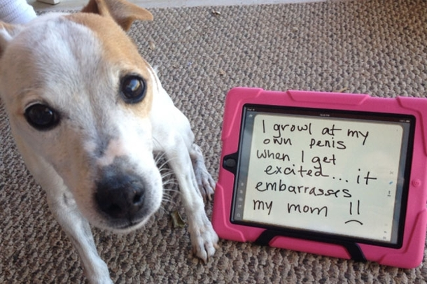 Pic #1 - Dog shaming
