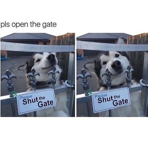 pic 1 please open the gate meme guy