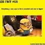 Pic #17 - Useless Facts