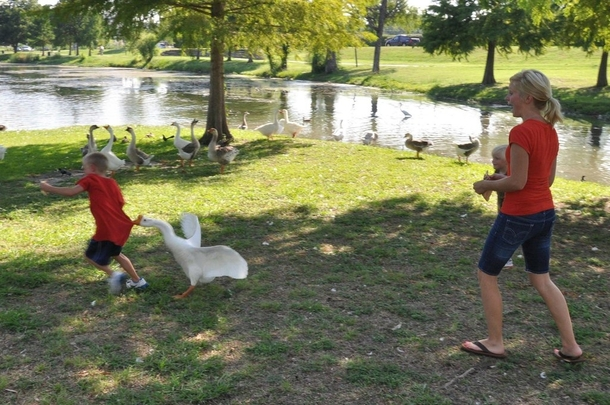 Pic #2 - I told Zack Dont rush the Geese He responds  am not afraid of any animals So what does a good parent do Grab my camera and take pictures of the lesson my son is about to learnThis is the  picture version of the escapade