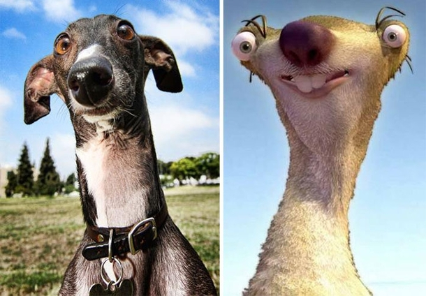 Pic #6 - Dogs that look like other things