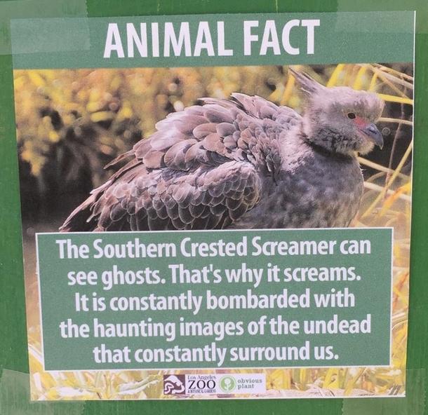 Pic 6 Guy Puts Fake Signs Around The La Zoo Meme Guy