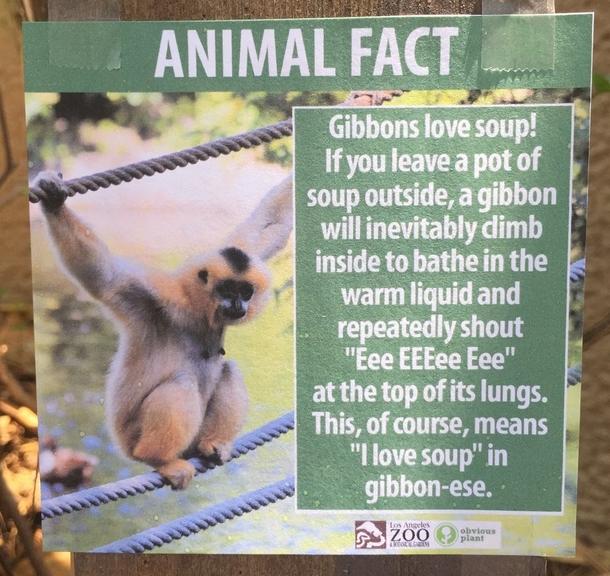 Pic 8 Guy Puts Fake Signs Around The La Zoo Meme Guy