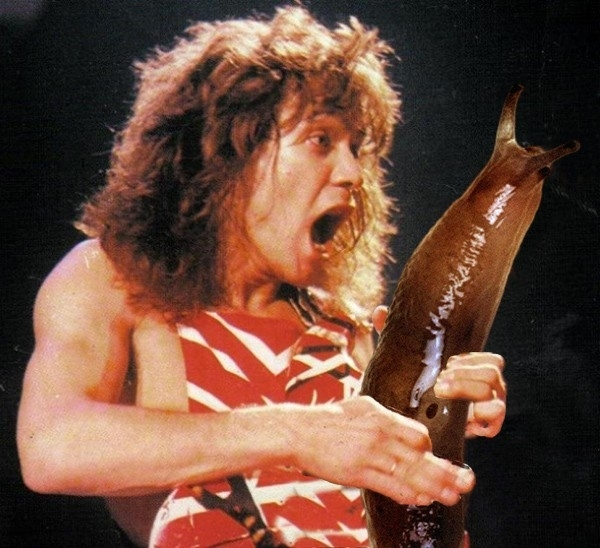 Pic #8 - Rockstars soloing with giant slugs explains the faces