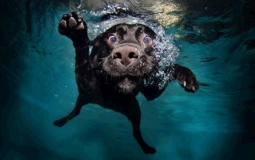 Pic #9 - Dogs  ball  Underwater camera