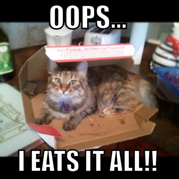 pizza cat 7078 pizza cat meme guy,Pizza Cat Meme