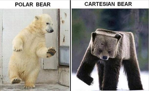 Polar Bear Meme Guy