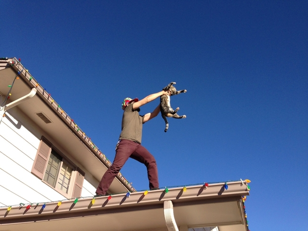 Putting up the Christmas lights and the cat jumped on the roof so he started singing The Circle of Life