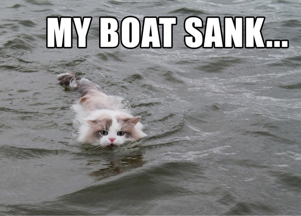 Image result for cat swimming meme