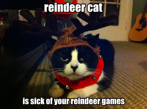 Funny Reindeer Meme : Reindeer cat is sick of this meme guy