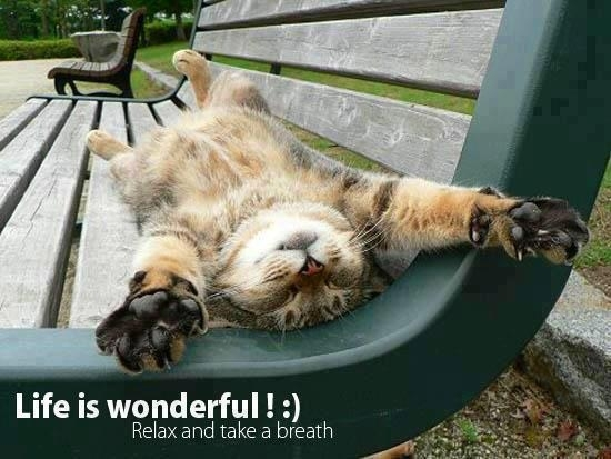 Relax life is wonderfulgt Super cool cat