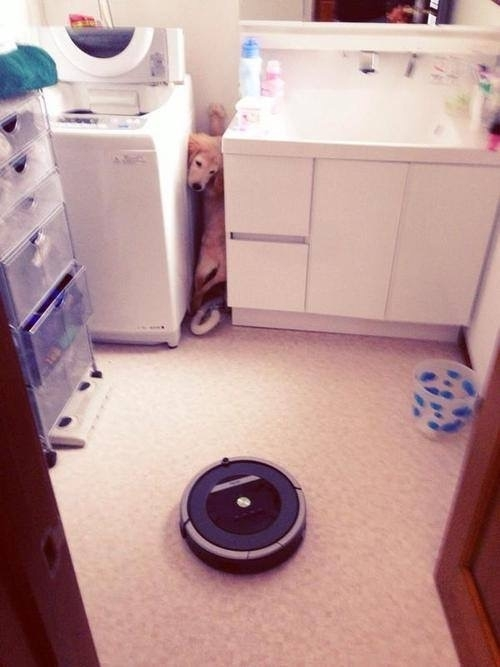 Roombas the NOPE of dog world