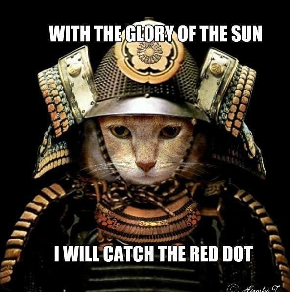 Samurai Cat Meme Guy