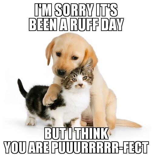 Funny Meme To Send To Boyfriend : Sent to my boyfriend who got fired today meme guy