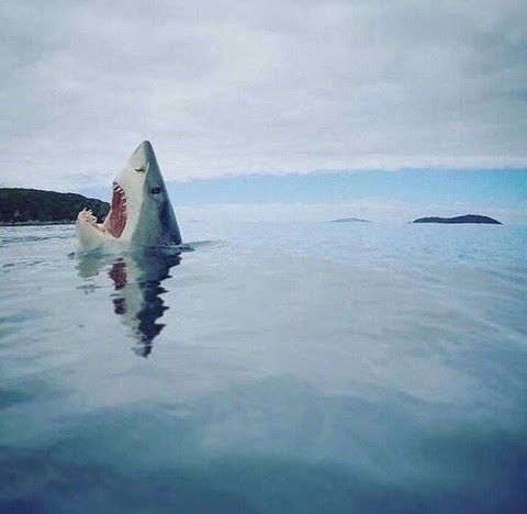 Shark stubbed its toe on a coral reef