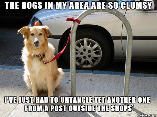 I Has A Friend Dog Meme