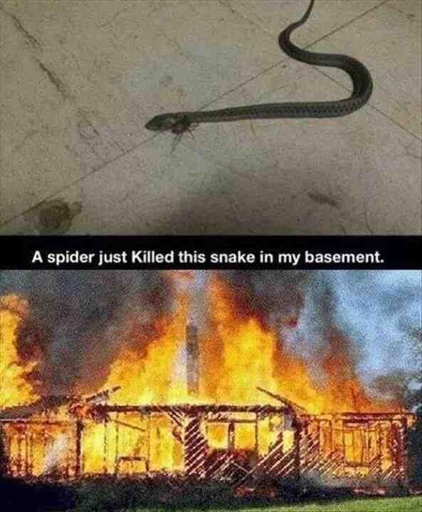 So This Spider Killed The Snake In My Basement Meme Guy