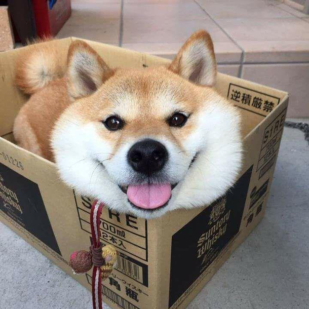 Someone ordered a box of dog