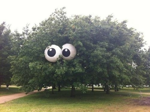 Someone put giant googly eyes in this tree