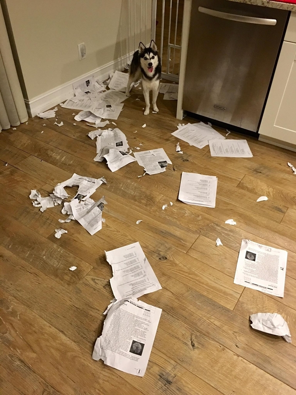 Sorry class my dog ate everyones homework