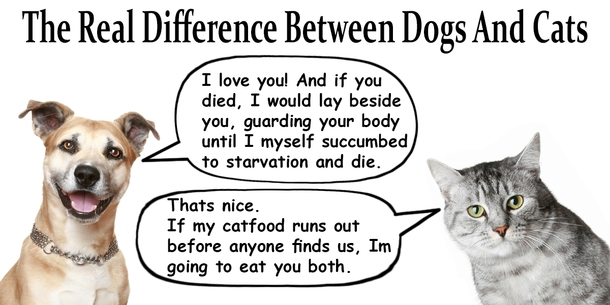 a comparison between a dog and a cat It seems like there's been a neverending argument between certain dog people and cat people, which seems pretty crazy considering how most of us can agree that dogs and cats are both cute and the only difference is between dog people and cat people there's a reason for it, if you look.