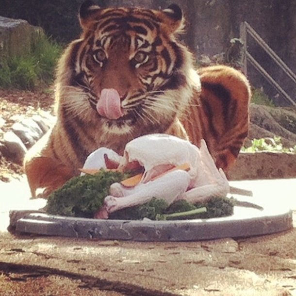 The San Francisco Zoo just posted this picture of Jillians Thanksgiving