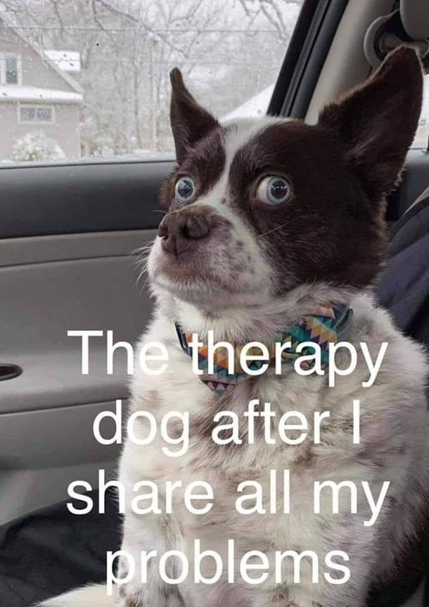 Therapy Dog Is A Good Listener Meme Guy