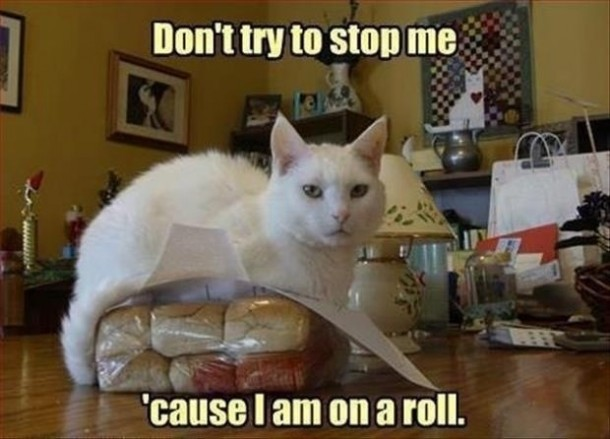 This cat is on a roll
