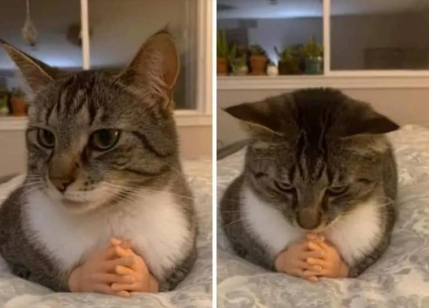 cat with tiny hands cheap online