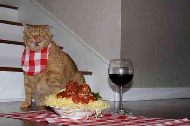 this isnt lasagna you piece of shit 118152 lasagna photos meme guy,Lasagna Meme