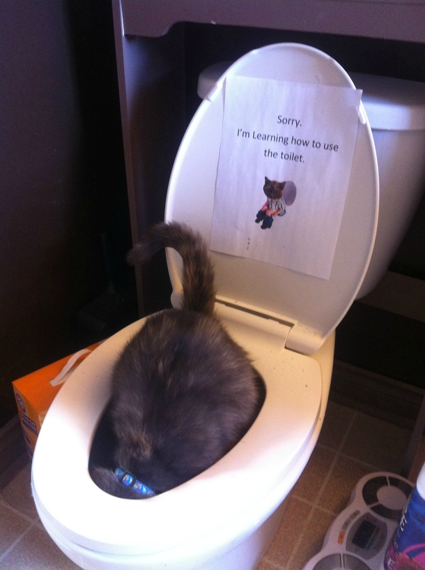This whole time I thought I had successfully toilet trained my cat this is how I find out she does it