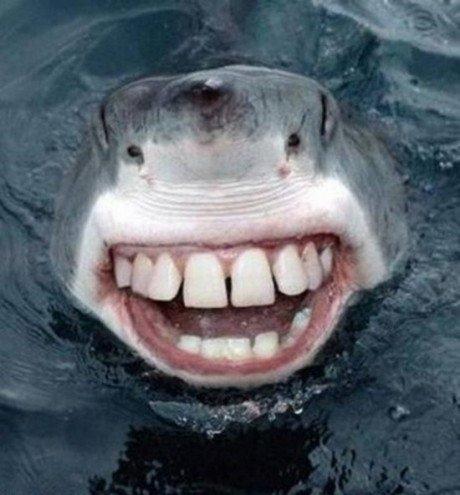 Image result for shark tooth meme